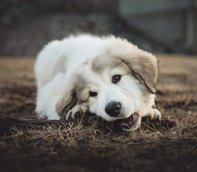 Tips to choosing the right chew for your dog
