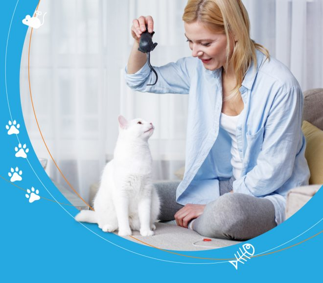 3 tips for the purrfect cat sit