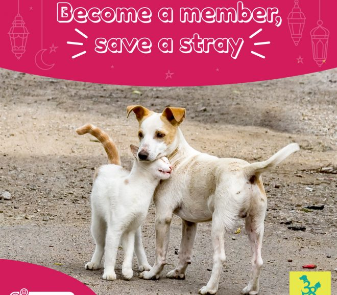 Become a member, save a stray