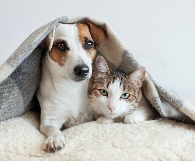 Managing your pet's separation anxiety