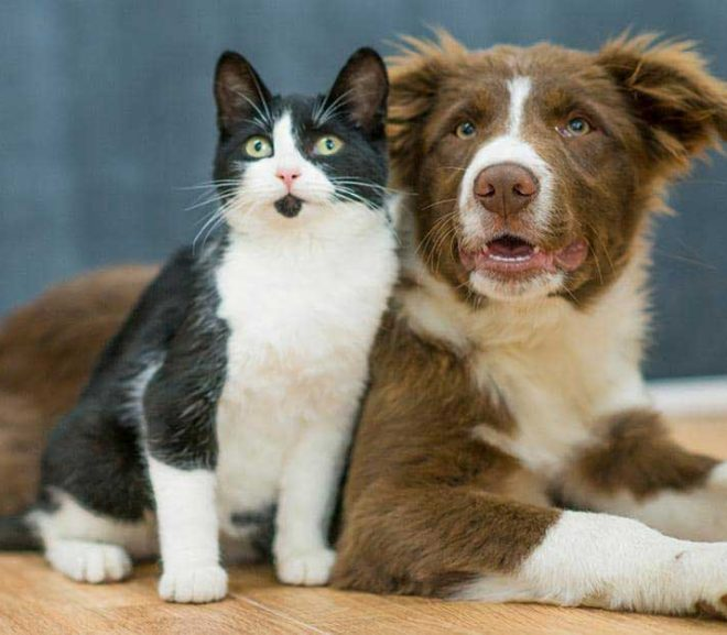 Finding Your Pawfect Buddy