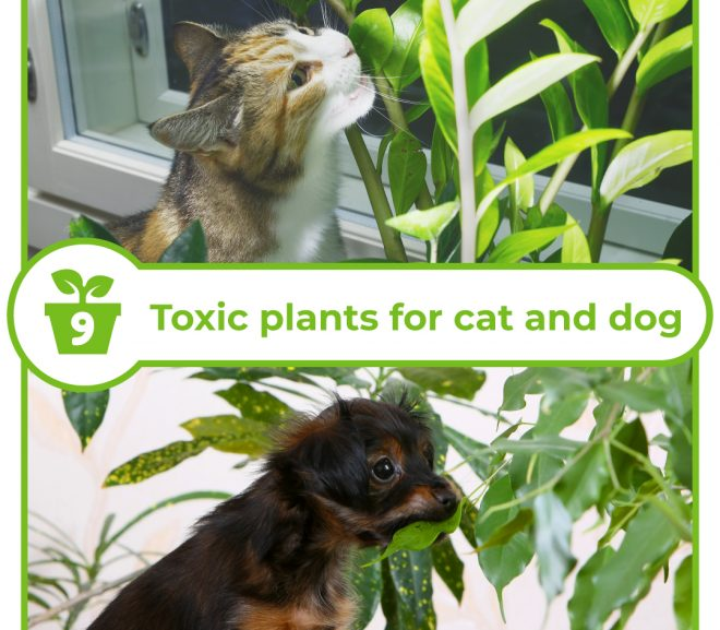 Toxic plants for cat and dog