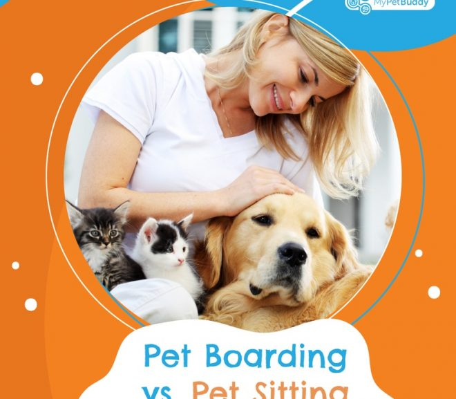 Why pet-sitting is better for your pet than boarding?