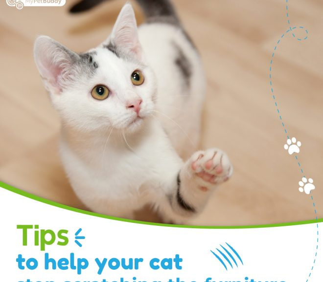 Tips to help your cat stop scratching the furniture