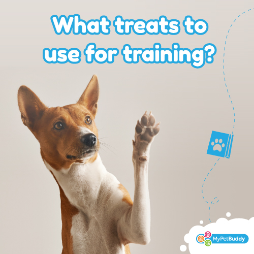 What treats to use for training!