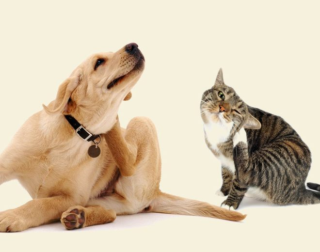 4 Natural Remedies to keep your pets flea and tick free!