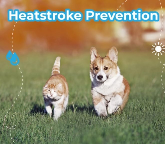 Heatstroke Prevention