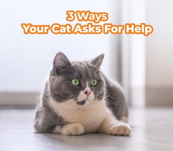 3 Ways Your Cat Asks For Help