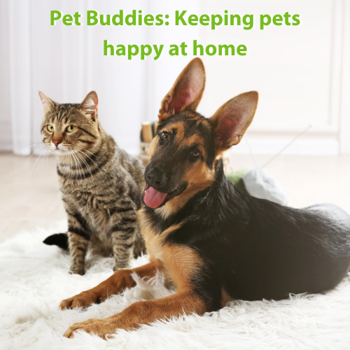 Pet buddies: Keeping pets happy at home